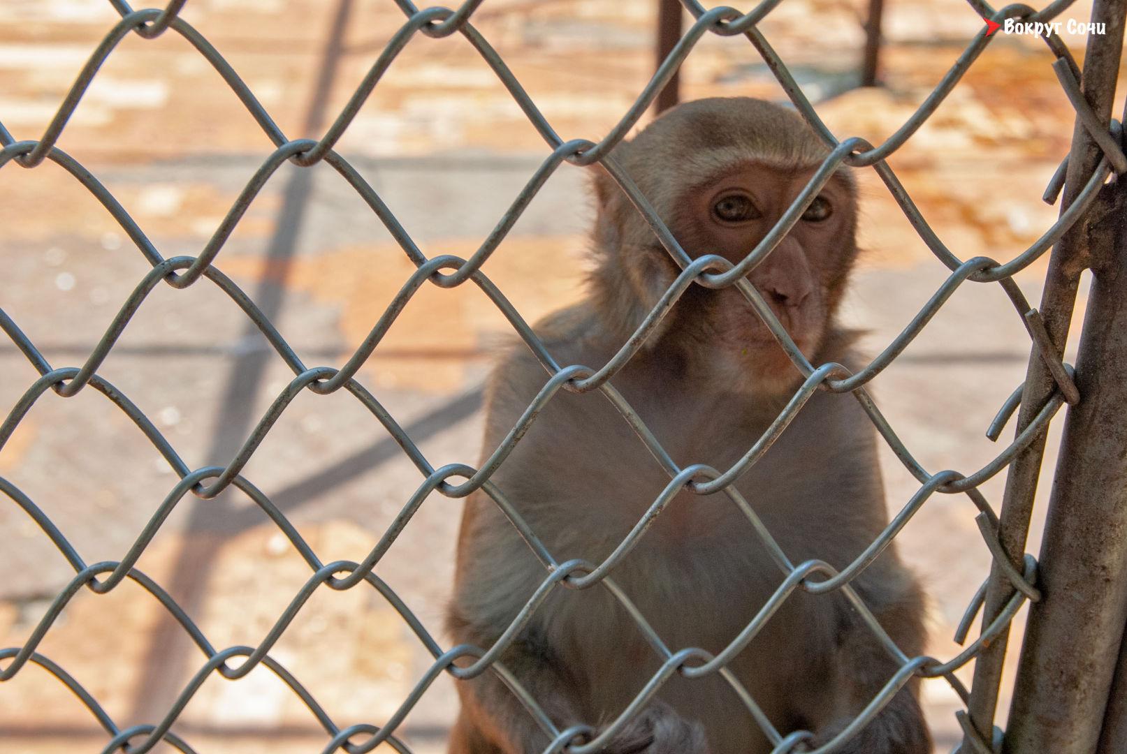 Сухум обезьяний питомник