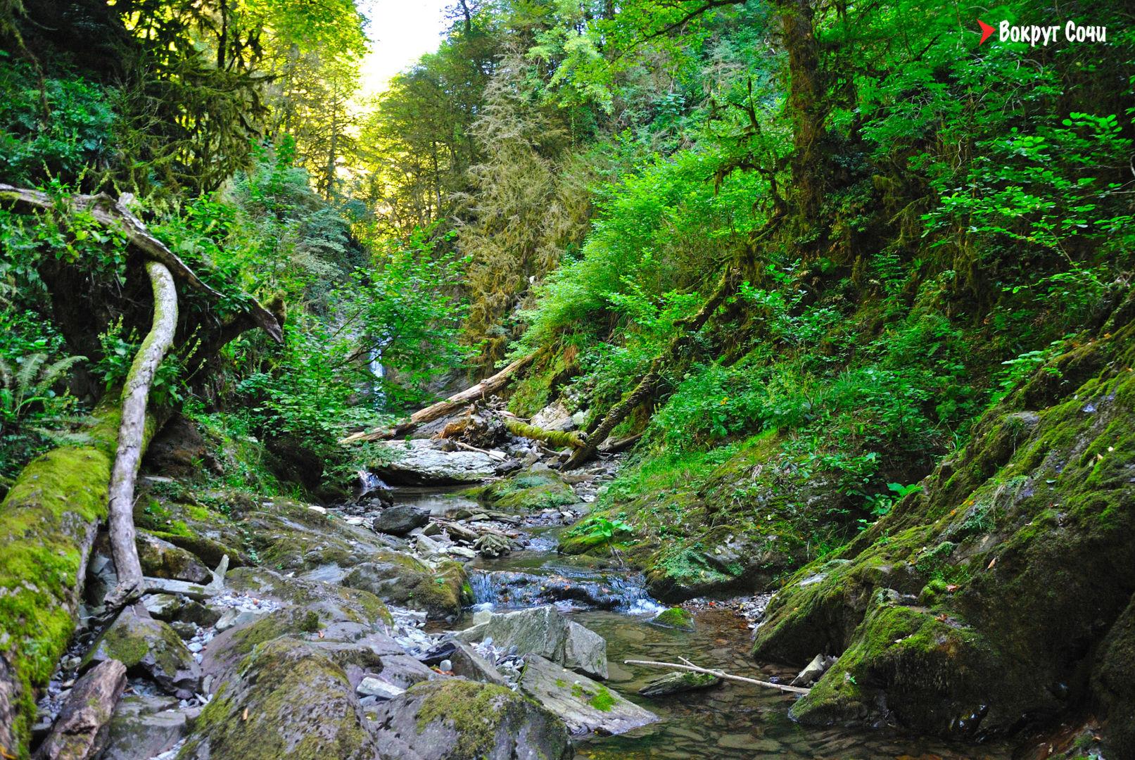 Самшитовый водопад